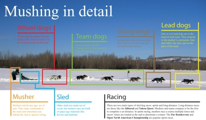 big_mushing-in-detail